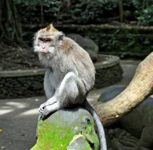 At the Secred Monkey Forest Sancturary Padangtegal - Ubud