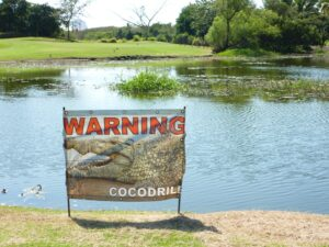 Beware the crocodiles at Flamingoes