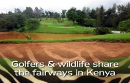Golfers & Wildlife share fairways in Kenya